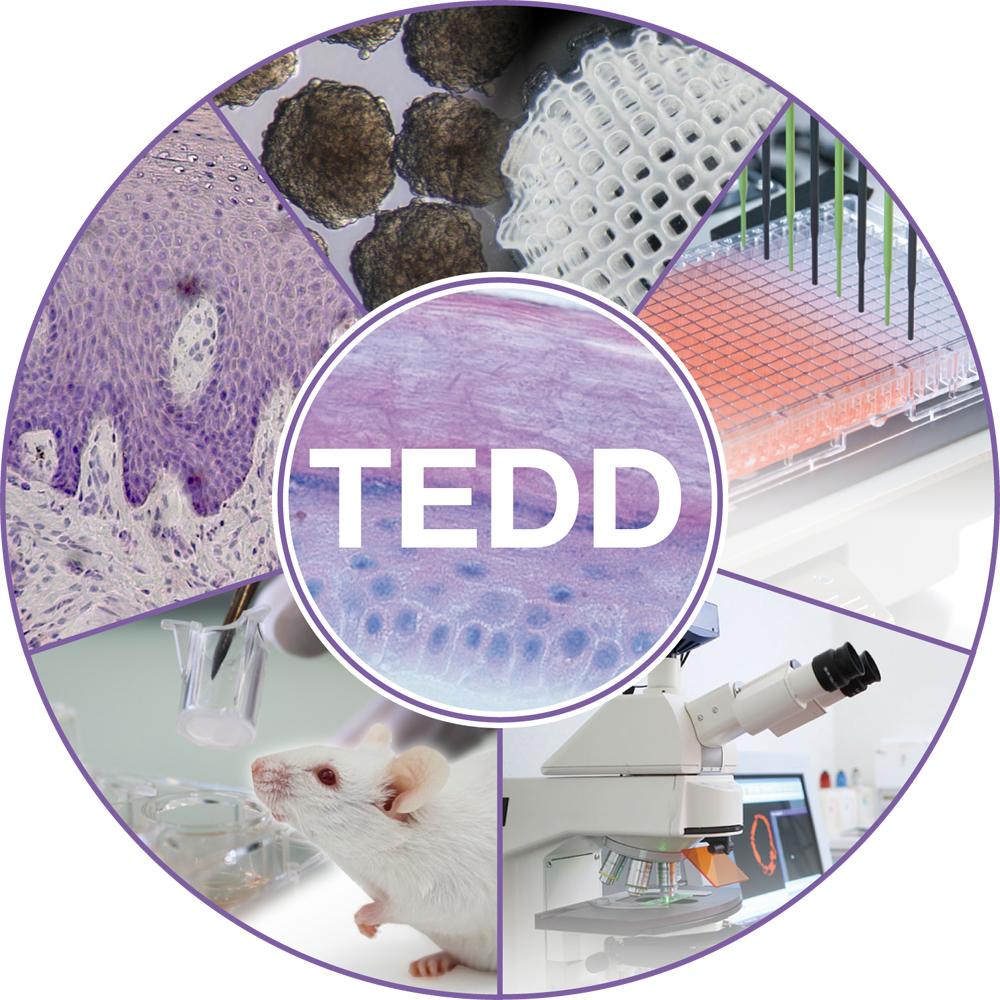TEDD_Bild_low.jpg